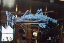 "36"" Striper bass, back blasted on a beveled mirror. Teal coloration added to make the design more pronounced and to match wall trim in the room. Local Pub, Cape Cod, Mass."